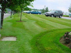 Commercial Lawn Care Services in Boston